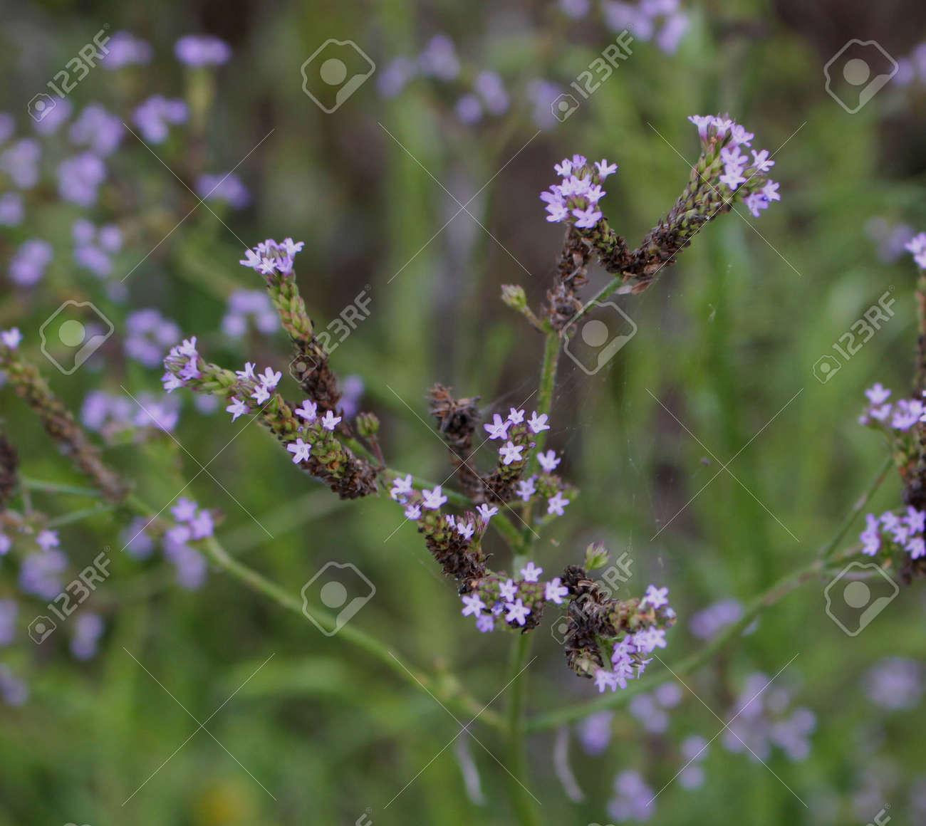 Purple perennial flowers stock photo picture and royalty free image purple perennial flowers stock photo 104089586 mightylinksfo