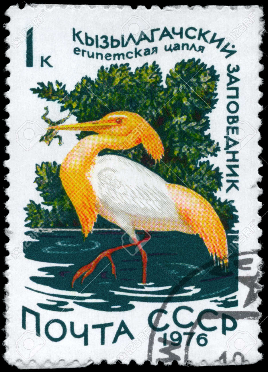 USSR - CIRCA 1976: A Stamp printed in USSR shows image of a Squacco Heron with the inscription