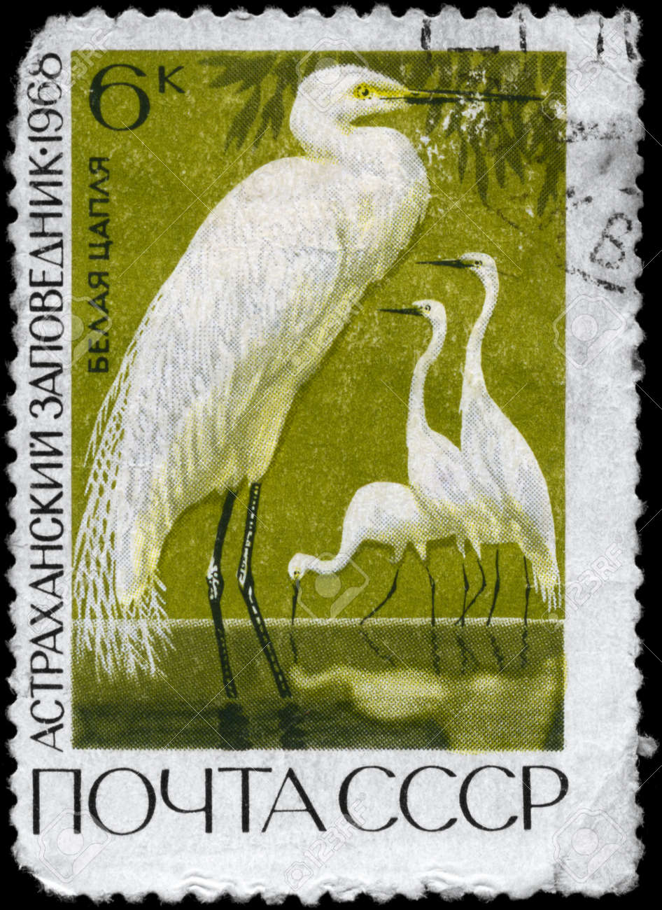 USSR - CIRCA 1968: A Stamp printed in USSR shows image of a Great White Egret from the series
