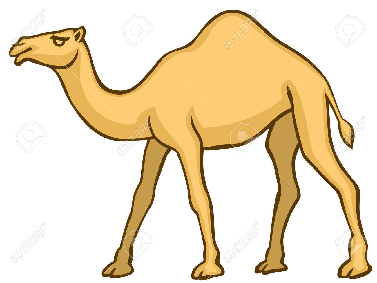 Camel on white background Stock Vector - 12658931