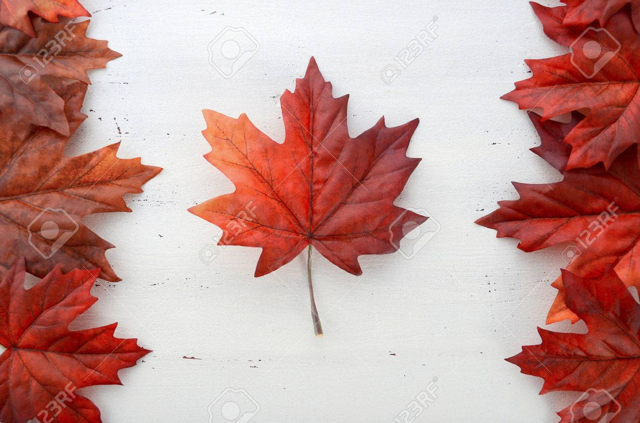 Happy Canada Day Red Silk Leaves In Shape Of Canadian Flag On ...