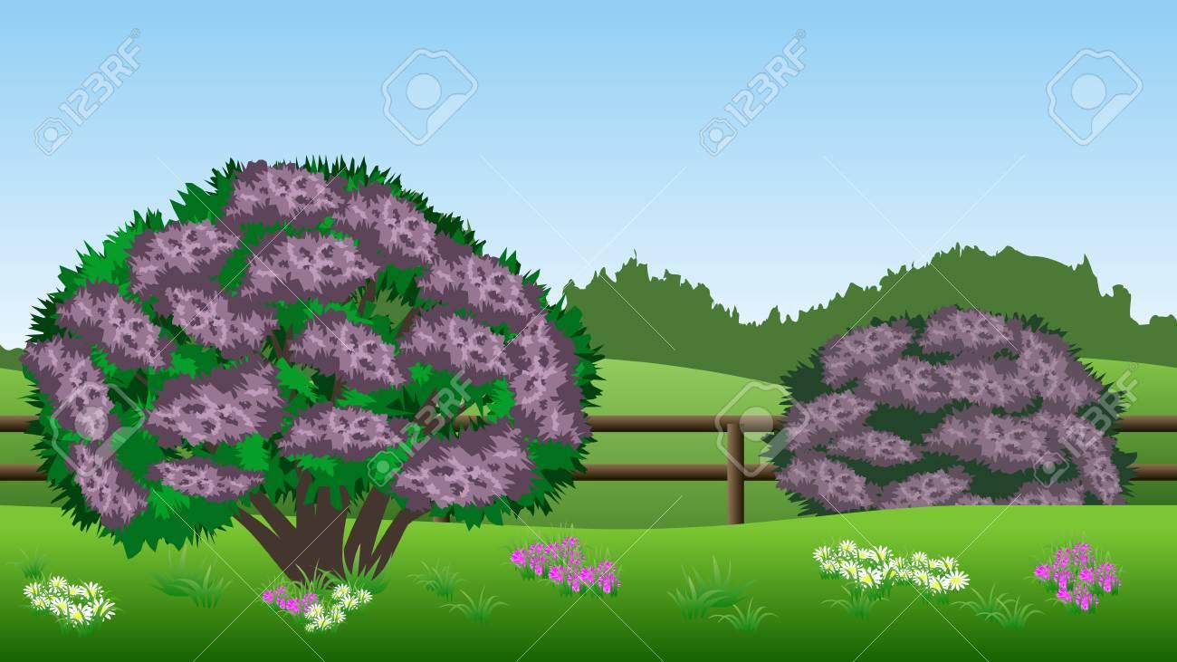 Summer Landscape Background Scene With Lilac Bushes Hills