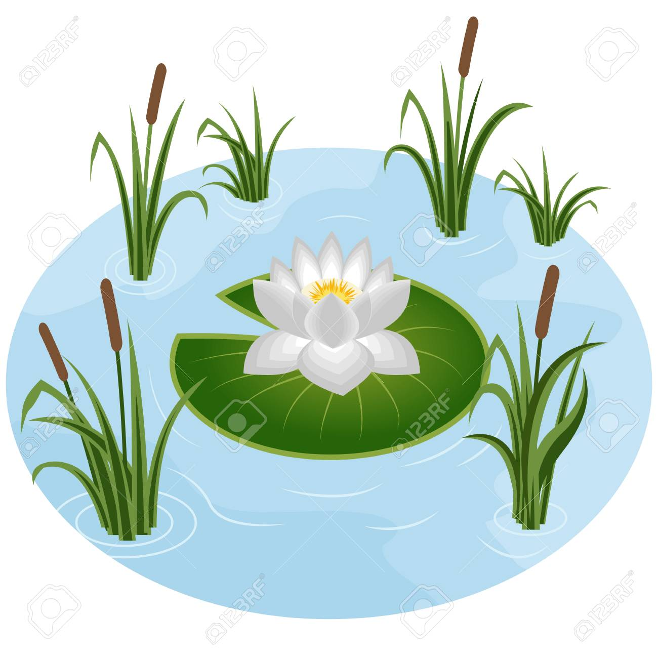 white water lily in pond surrounded by reeds in grass vector rh 123rf com grass vector artwork