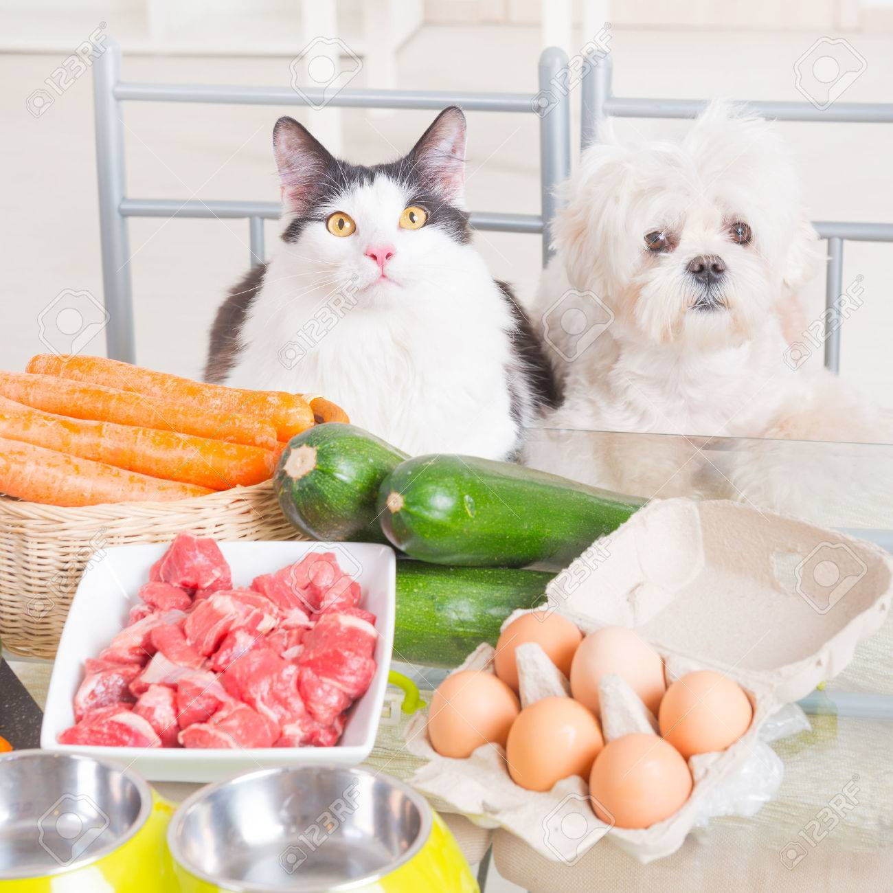 Preparing Natural Natural, Organic Food For Pets At Home Stock Photo    54601859
