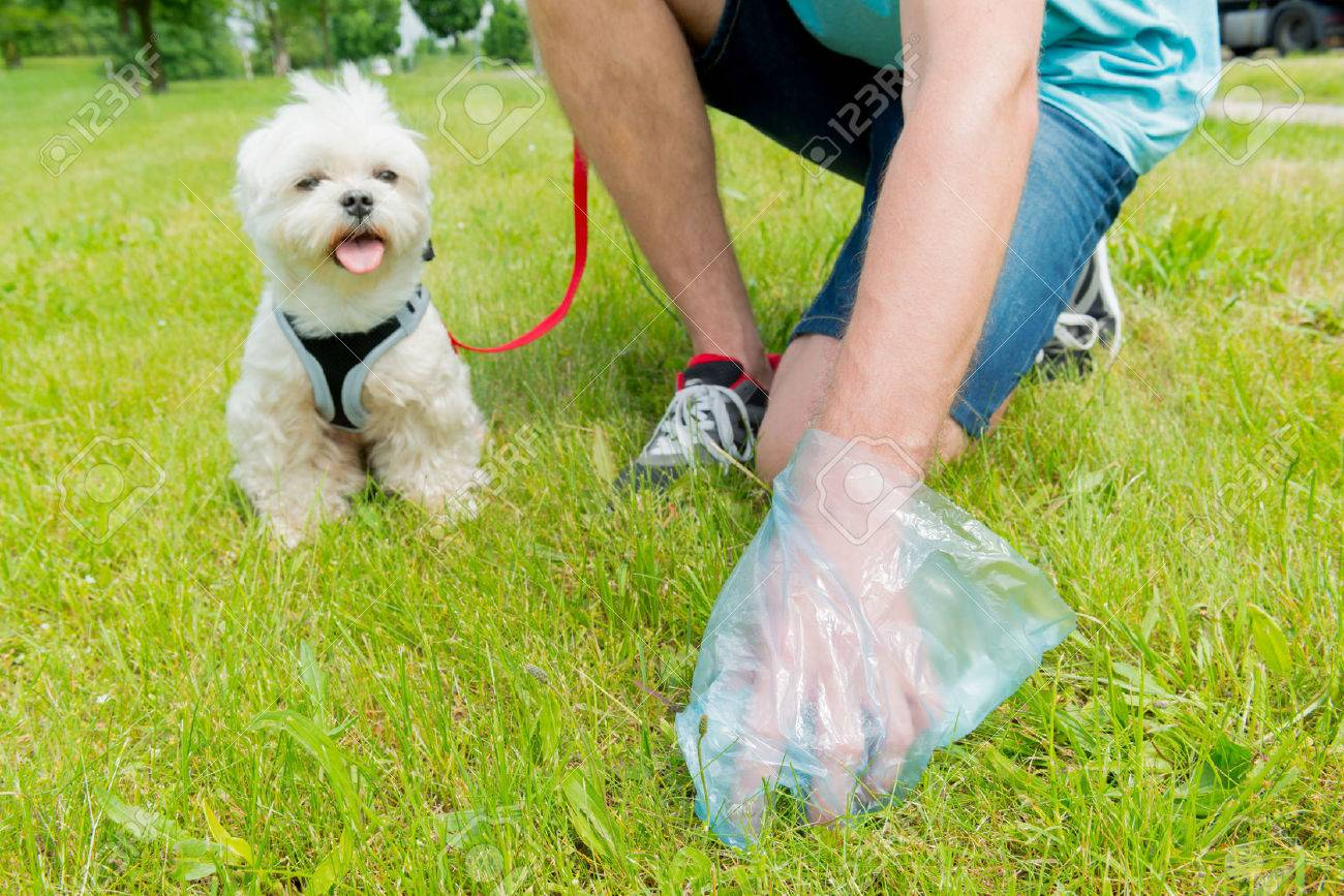 Owner cleaning up after the dog with plastic bag - 59119718
