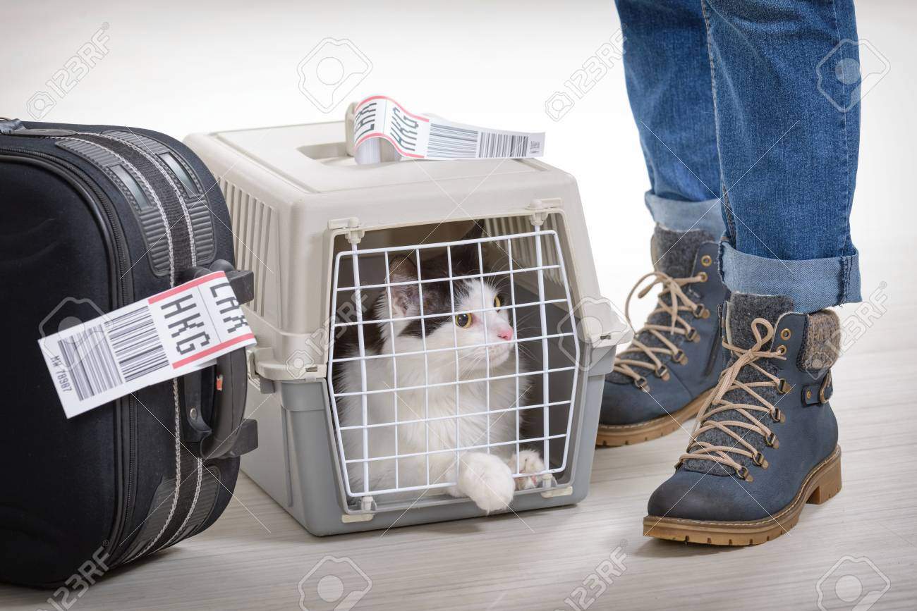Cat in the airline cargo pet carrier waiting at the airport after a long journey - 89244701