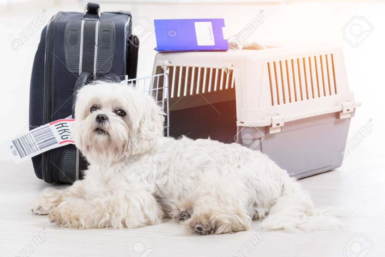 little dog waiting at the airport after a long journey with airline cargo pet carrier and his owner luggage in the background - 89676175