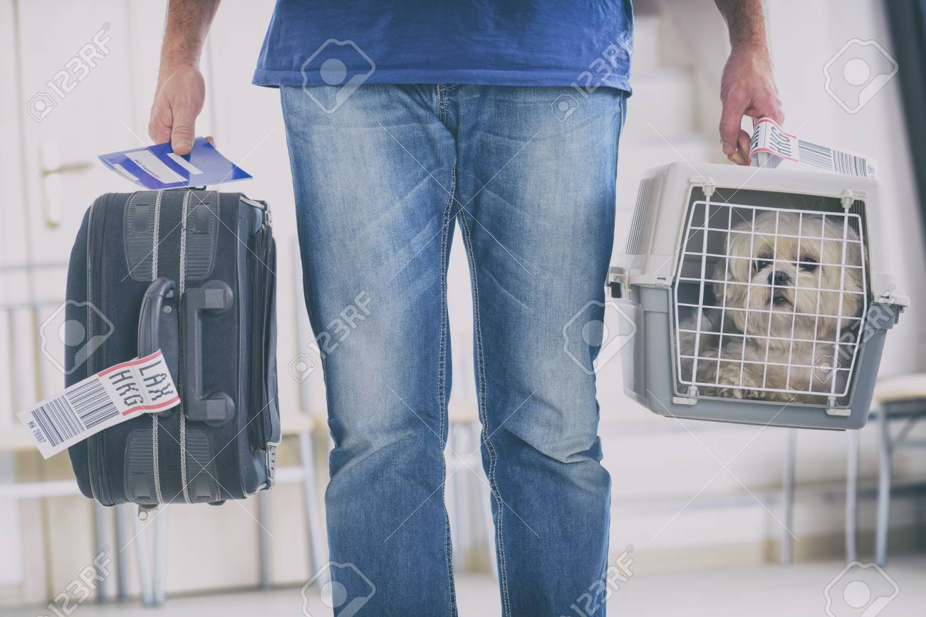 little dog in the airline cargo pet carrier at the airport after a long journey - 90358307