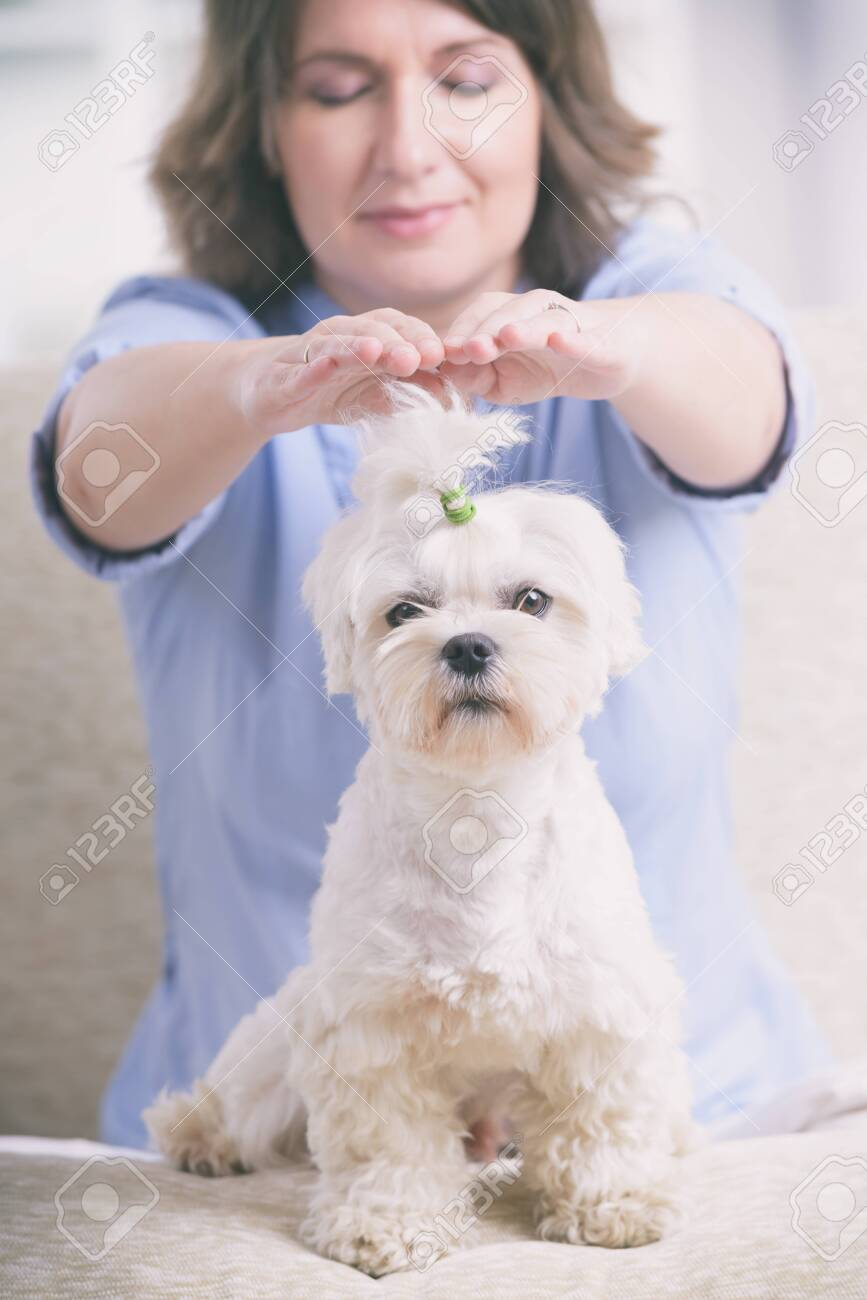 Woman doing Reiki therapy for a dog, a kind of energy medicine. - 139898618