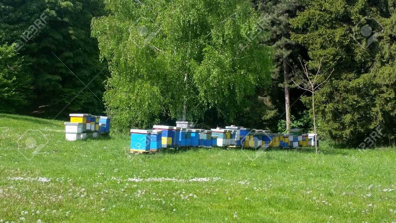 Hölzerner Gelber Und Blauer Bienenbienenstock Bienenstock Im Garten