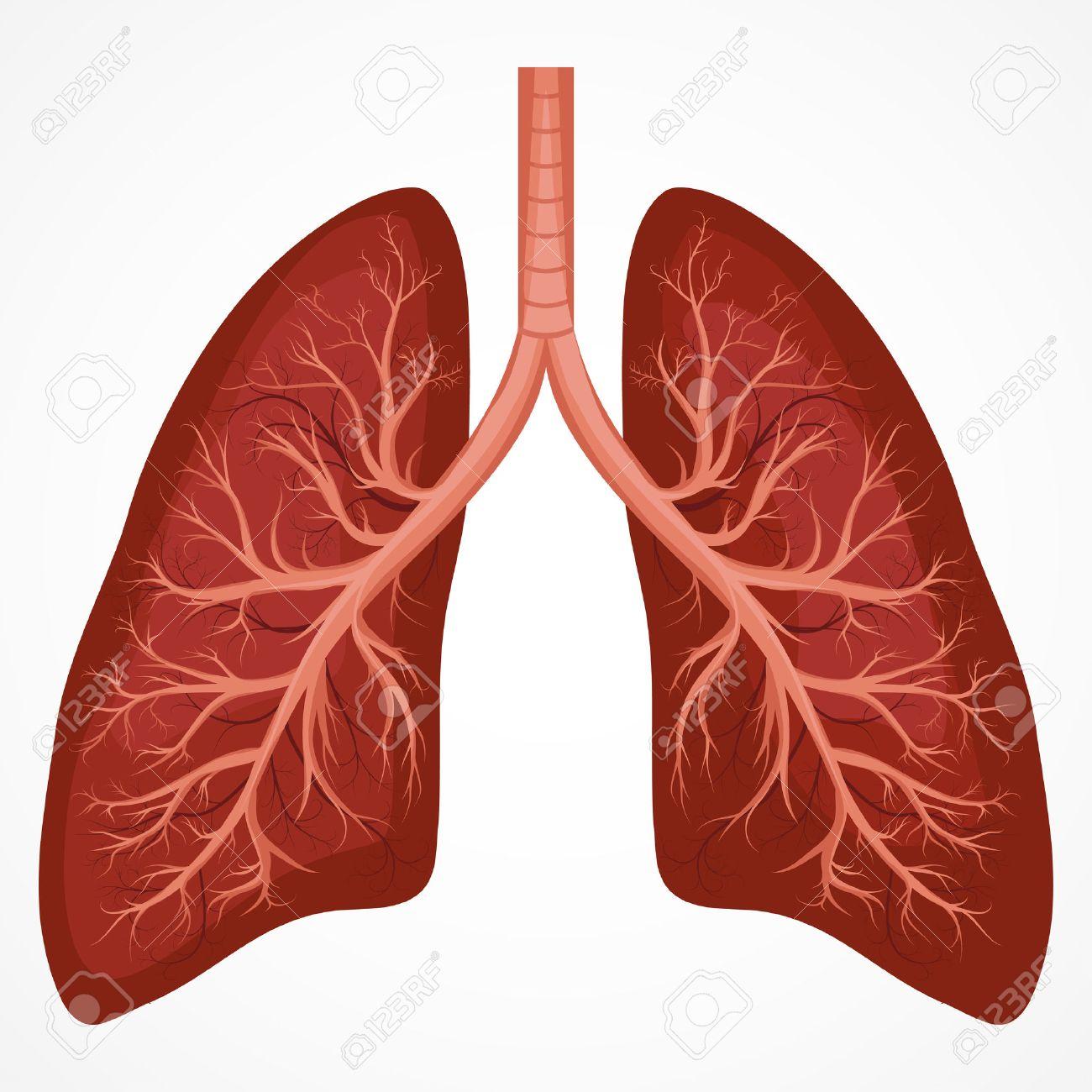 Diagrama De La Anatomía Humana De Pulmón. Enfermedad Gráficos Cáncer ...