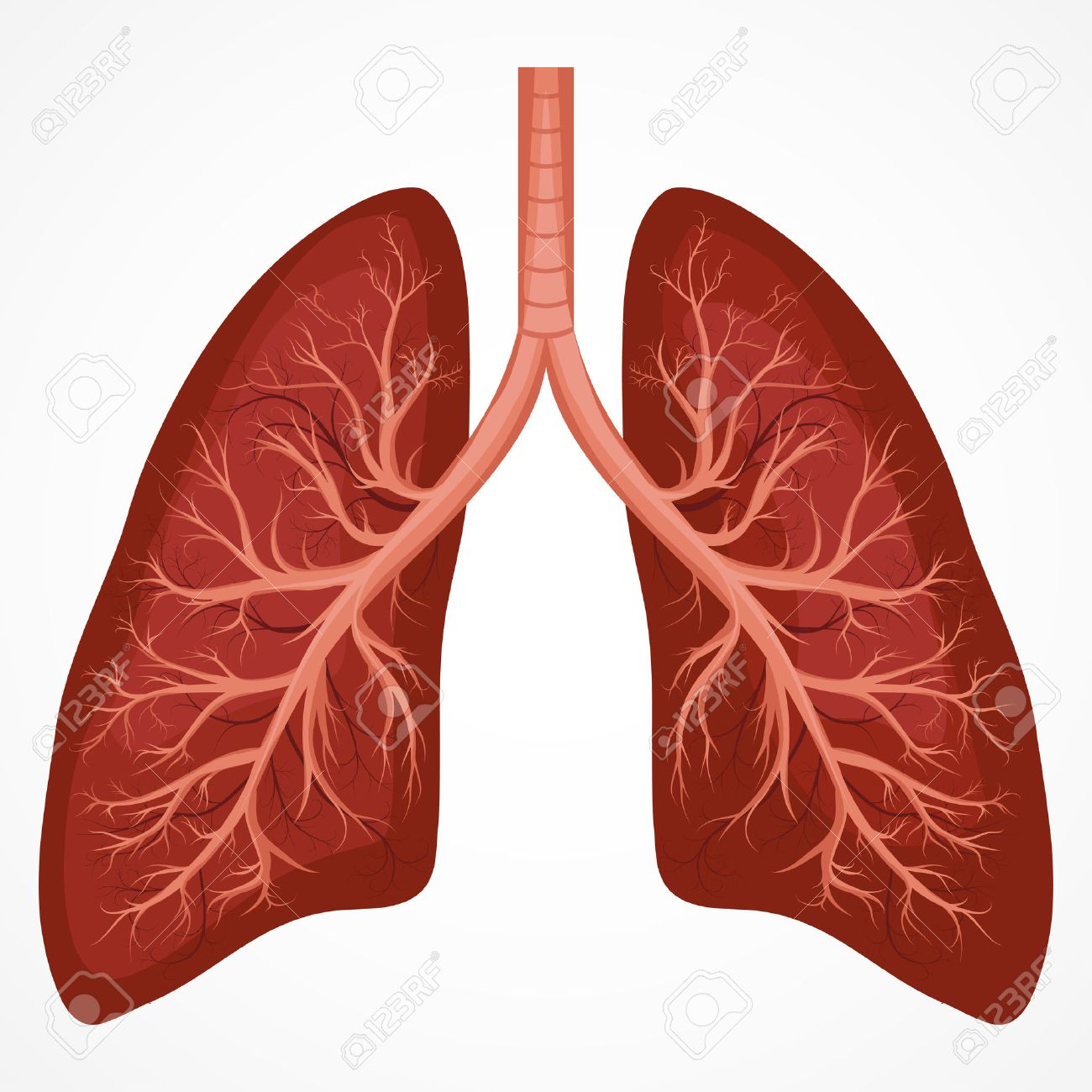 Lung anatomy diagram. Illness respiratory cancer graphics... on costal surface of lung, lung nodules, lung drawing, mediastinal surface of lung, clara cell, lung lobes, lung infection, conducting zone, lung model, respiratory bronchiole, bronchopulmonary segment, lung structure, lung hilum, base of lung, borders of lung, apex of lung, alveolar duct, horizontal fissure of right lung, lingula of left lung, lung cartoon, lung cross section, lung function, lung health, lung segments, lung apex, lung animation, lung disease, root of the lung, oblique fissure, lung force, cardiac notch, lung bleb, terminal bronchiole, hilum of lung, lung tree birds, right lung, lung mri, lung volumes, pulmonary alveolus,