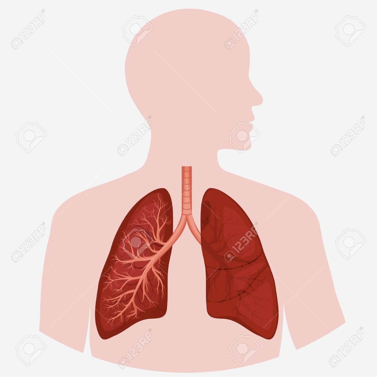 Human Lung Anatomy Diagram Illness Respiratory Cancer Graphics