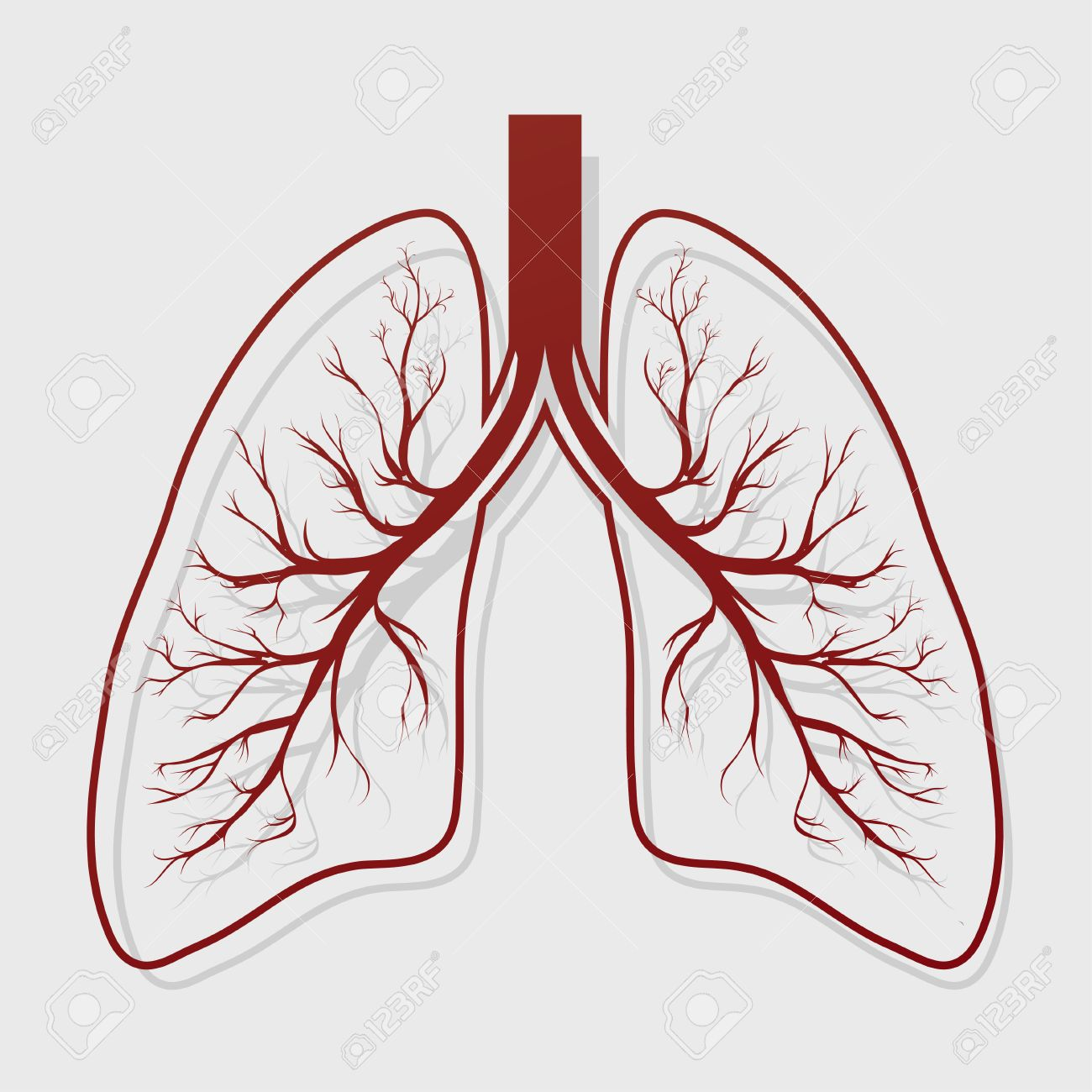Human Lung Anatomy Illustration . Illness Respiratory Cancer ...