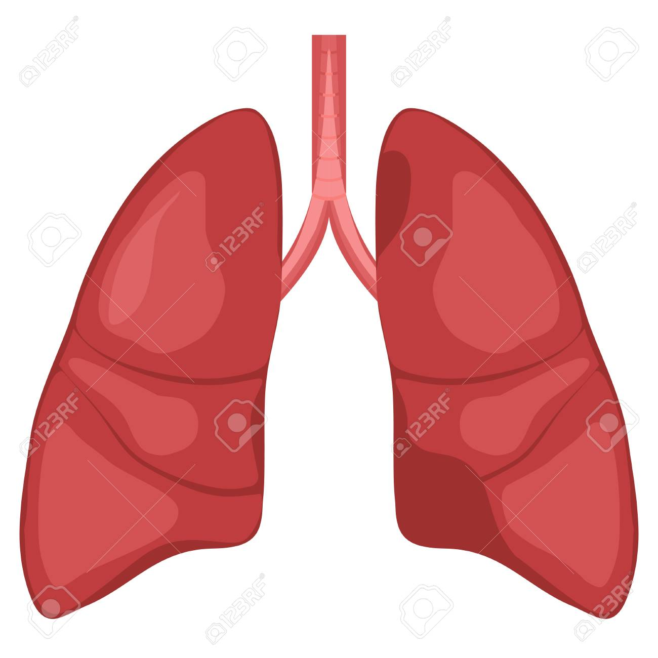 Human Lung Anatomy Diagram. Illness Respiratory Cancer Graphics ...