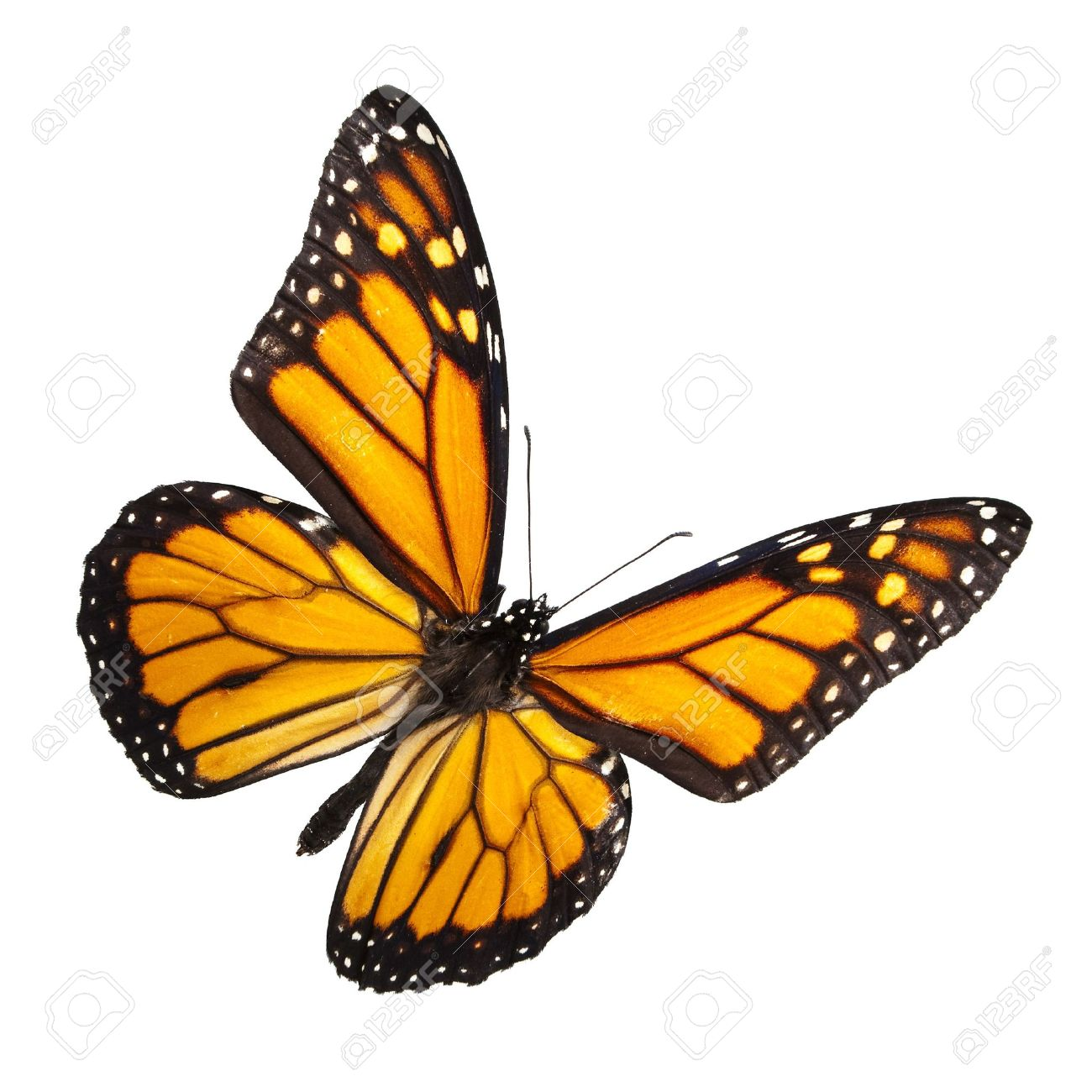 orange butterfly stock photos royalty free orange butterfly