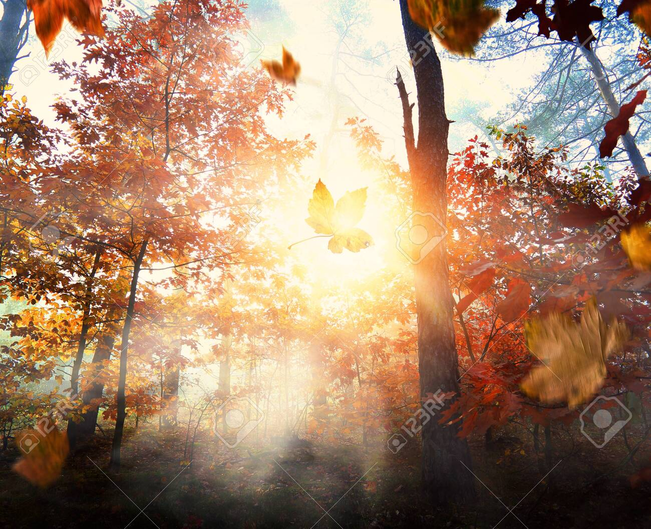 Misty and autumn morning in the forest - 133278026