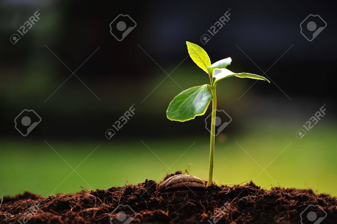 Green sprout growing from seed - 13434986
