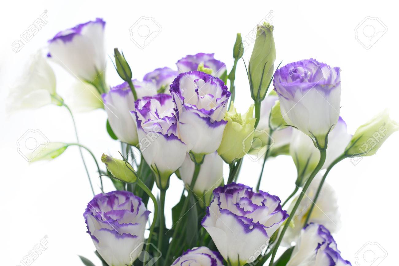 Bouquet of lisianthus flowers on white background stock photo bouquet of lisianthus flowers on white background stock photo 33130940 altavistaventures Choice Image