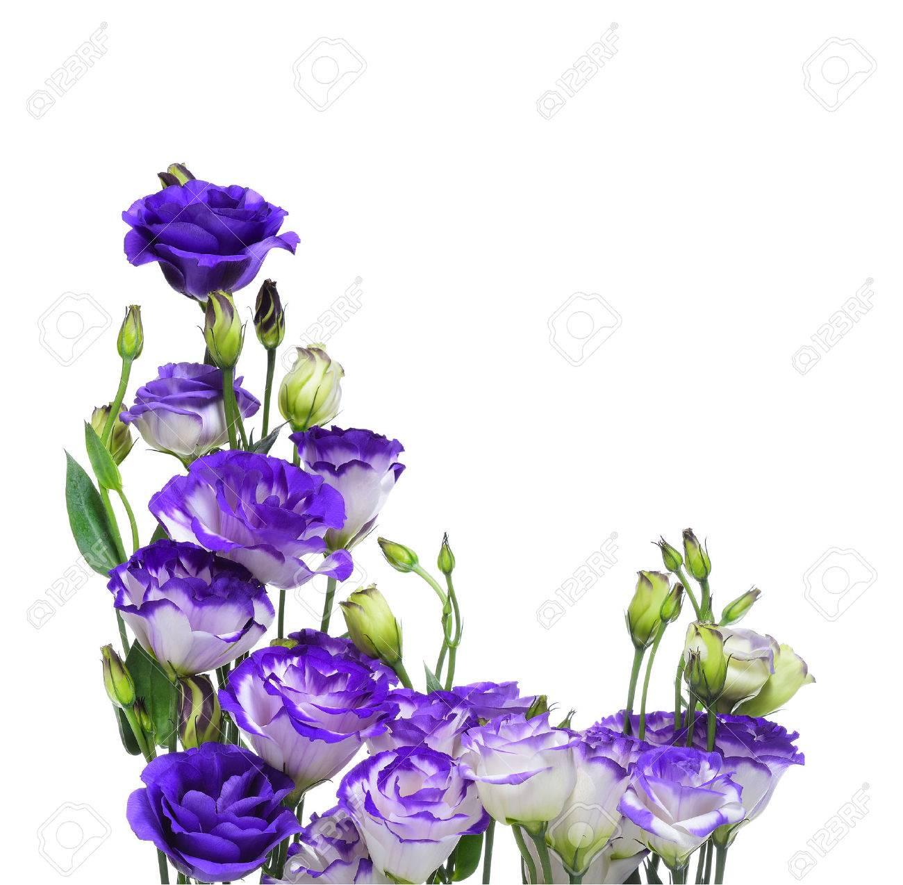 Purple lisianthus or eustoma flowers on white background stock photo purple lisianthus or eustoma flowers on white background stock photo 35143409 thecheapjerseys Choice Image