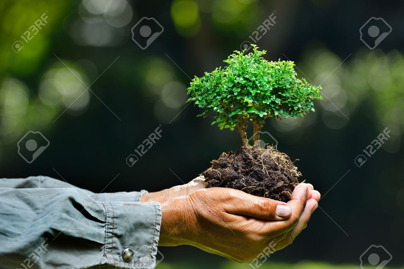 Farmer's hands holding a small tree on nature background Stock Photo - 49241464