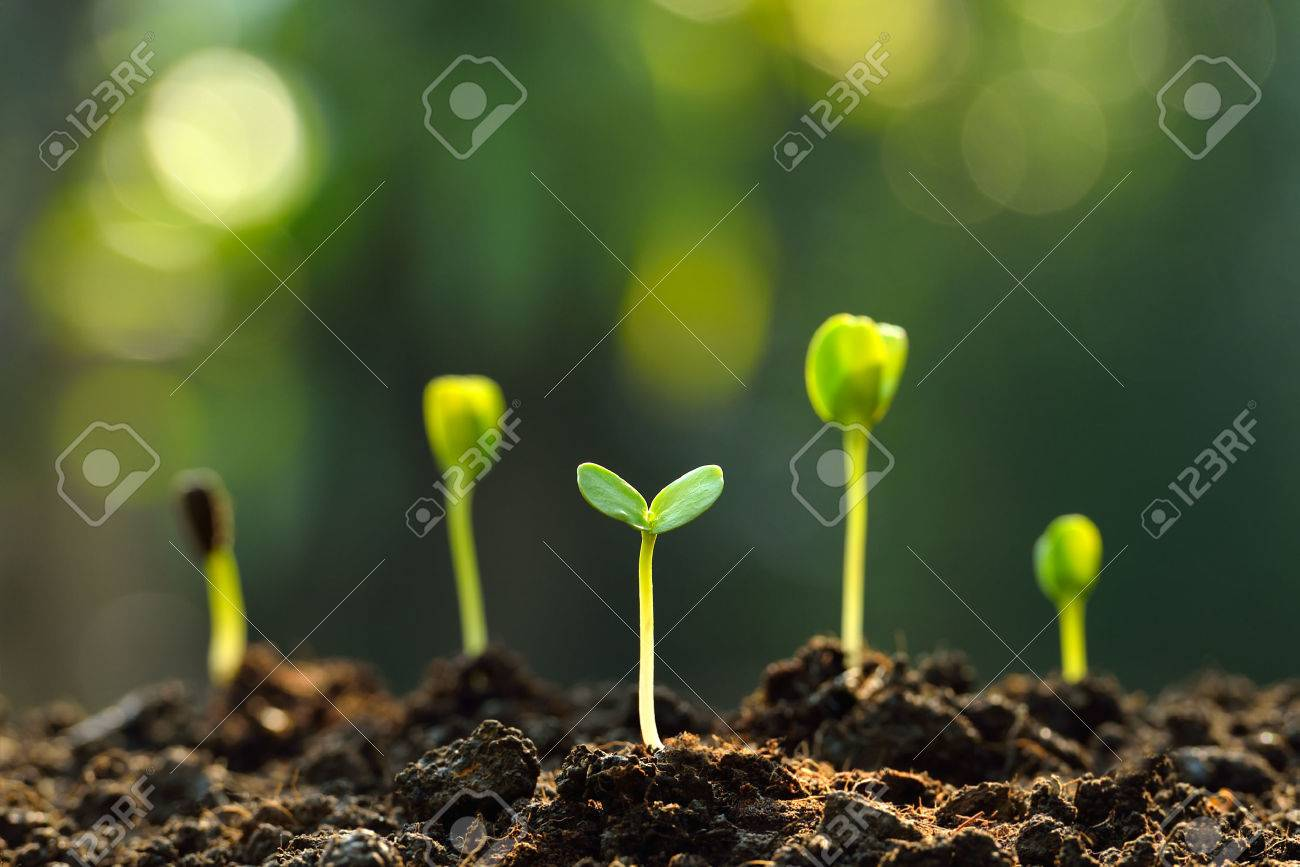 Group of green sprouts growing out from soil - 51429879