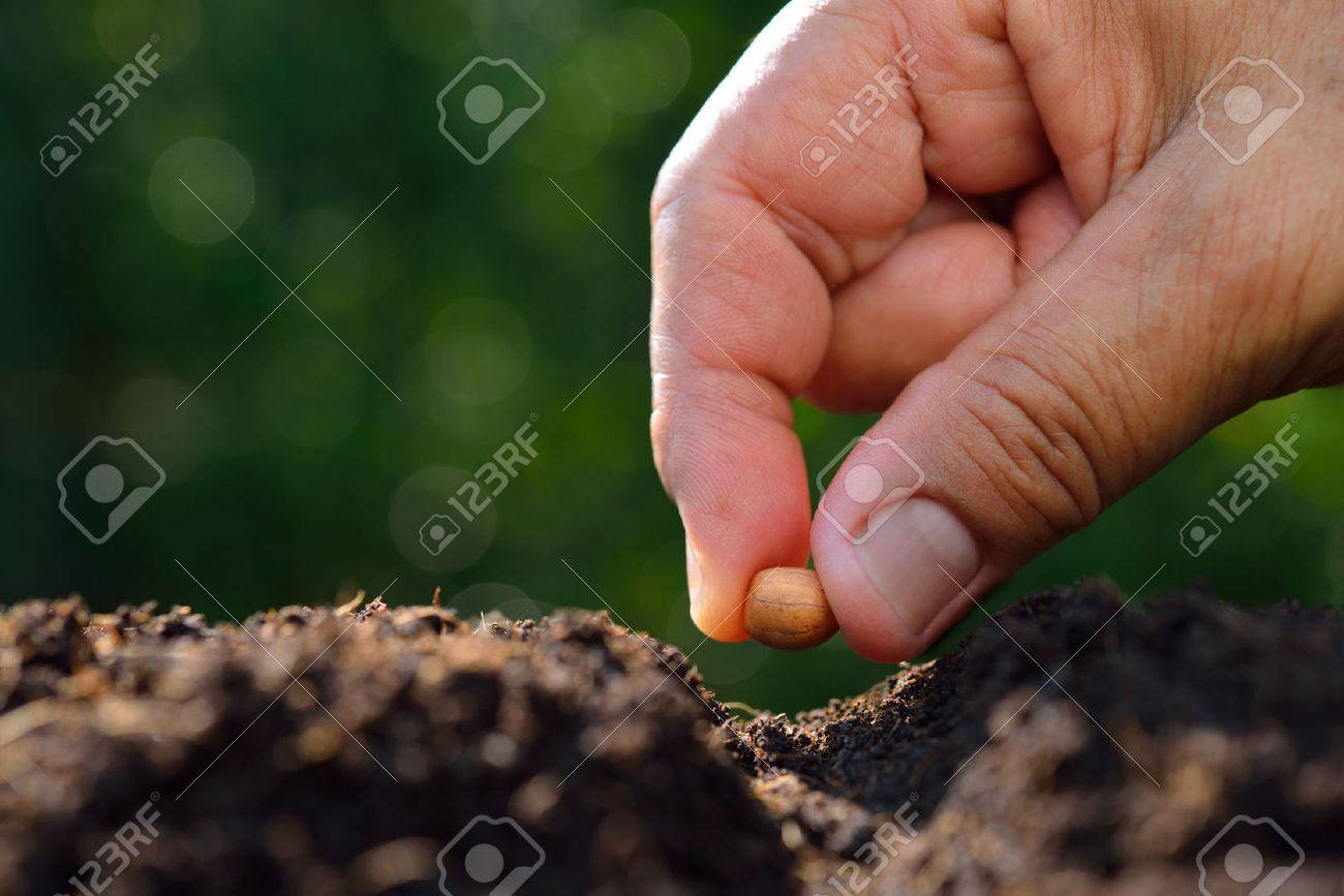 Farmer's hand planting a seed in soil - 57129686