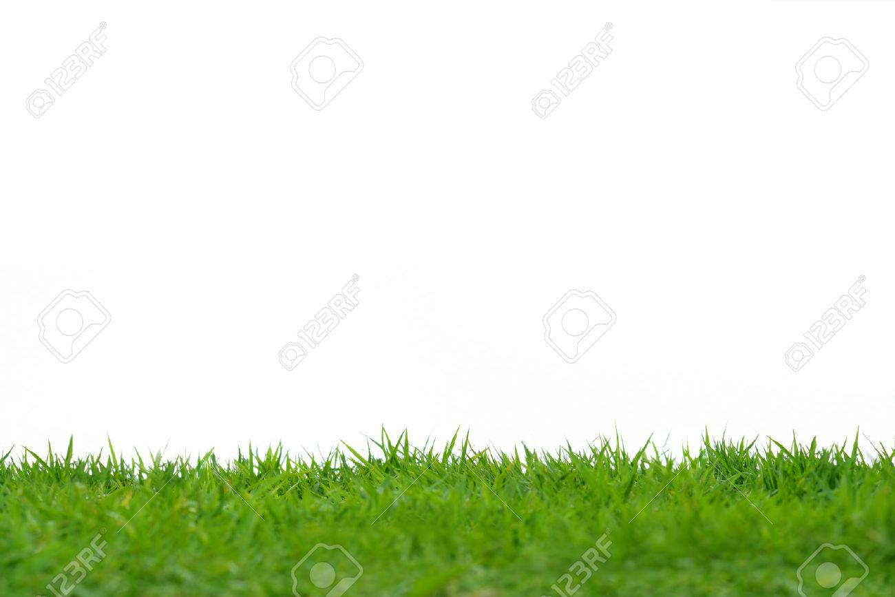Green grass meadow field isolated on white background - 58145304