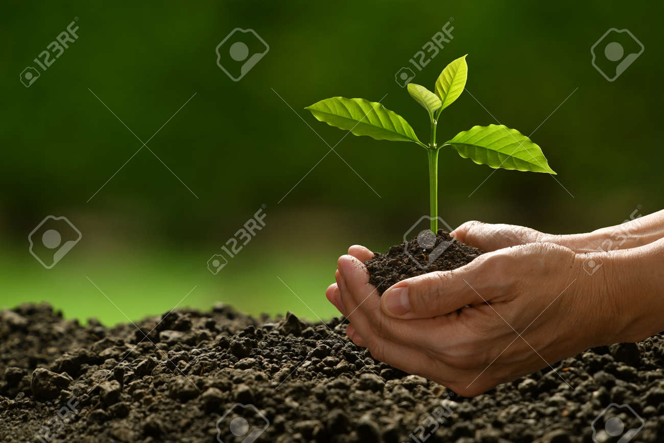 Hands holding and caring a green young plant on nature background - 157830872