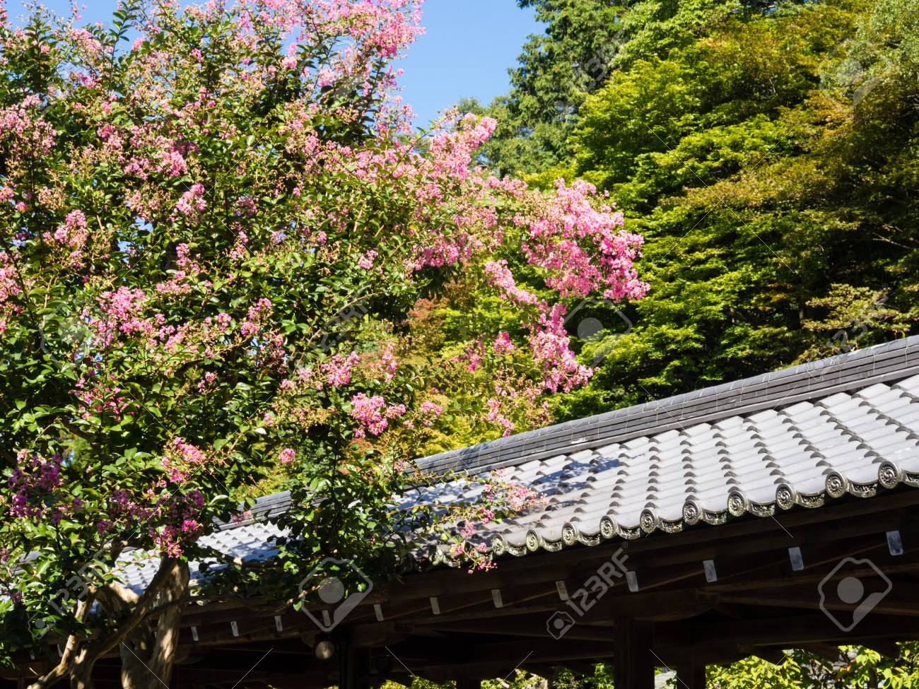 oriental garden with blooming tree and tile roof stock photo 65417122 - Oriental Garden