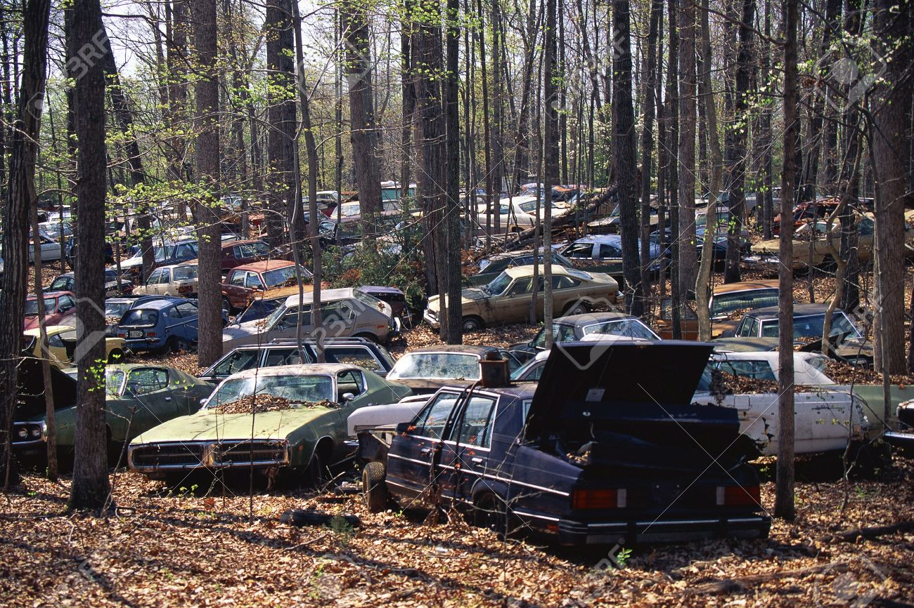 Abandoned Cars In The Woods Stock Photo Picture And Royalty Free