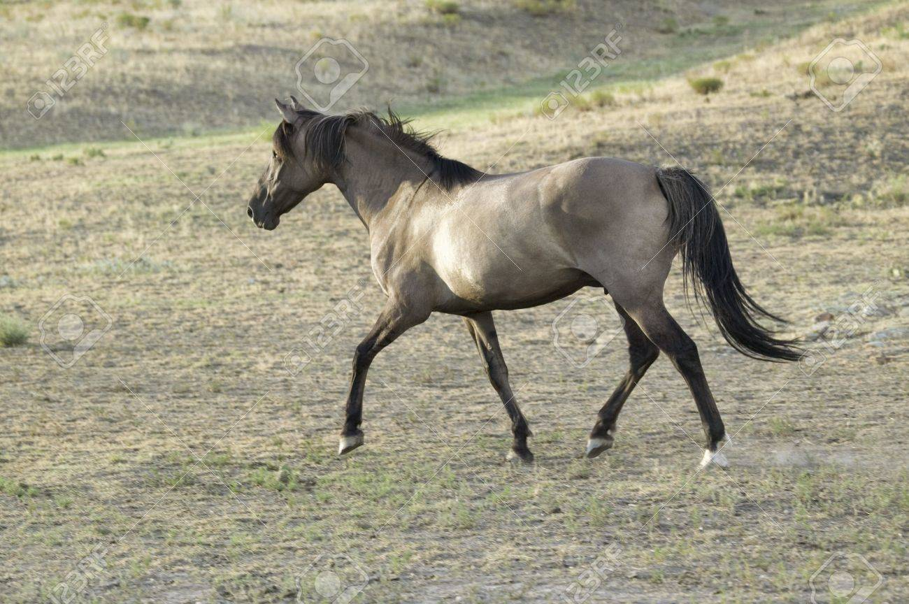 Running Horse At Black Hills Wild Horse Sanctuary The Home To Stock Photo Picture And Royalty Free Image Image 20512029