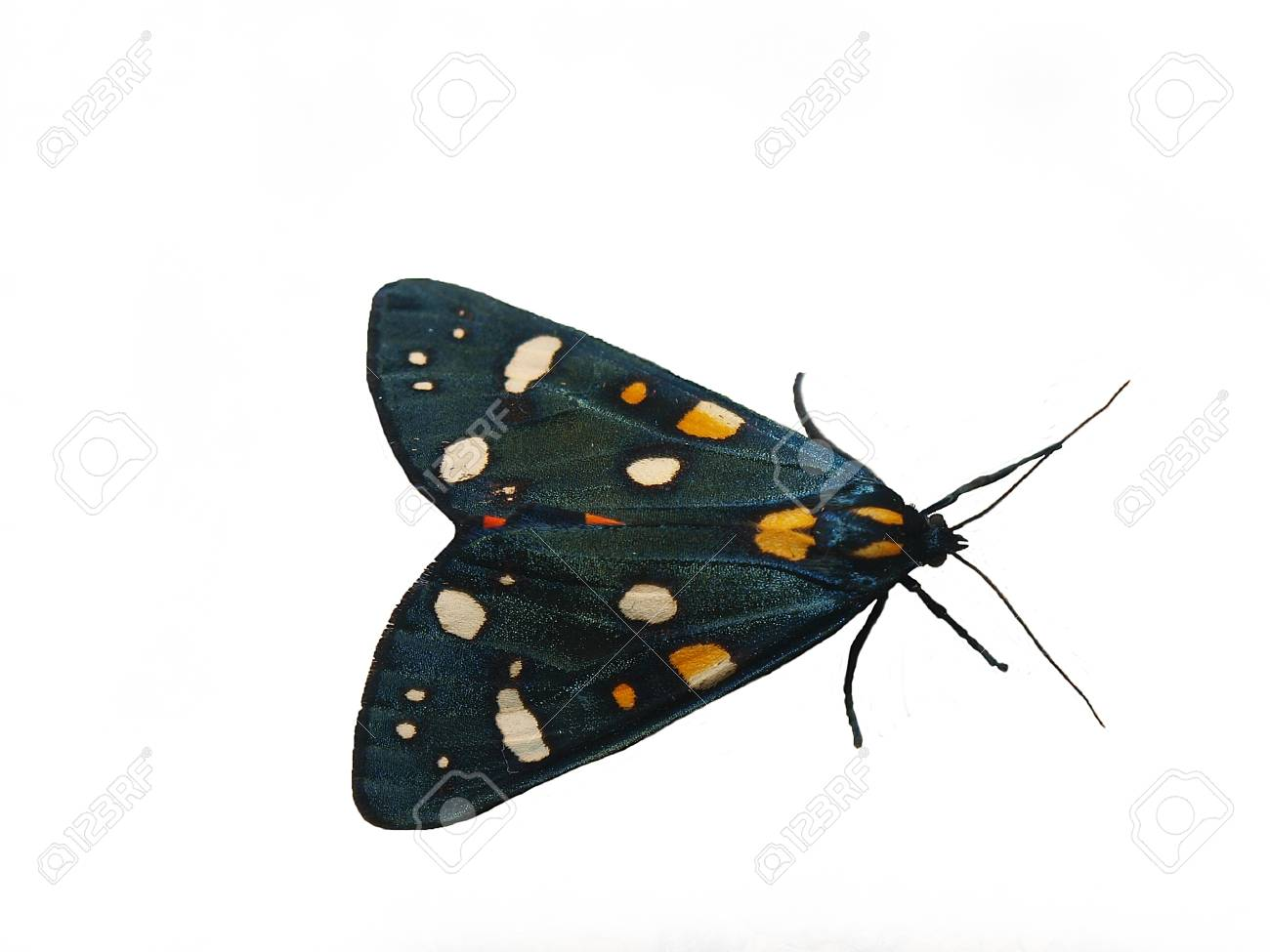 butterfly Stock Photo - 11508814