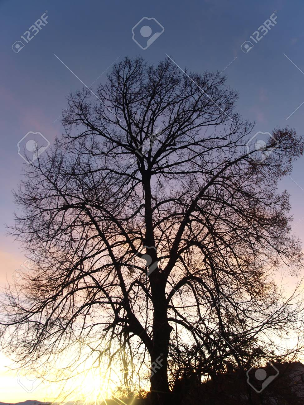 Tree Stock Photo - 12899223