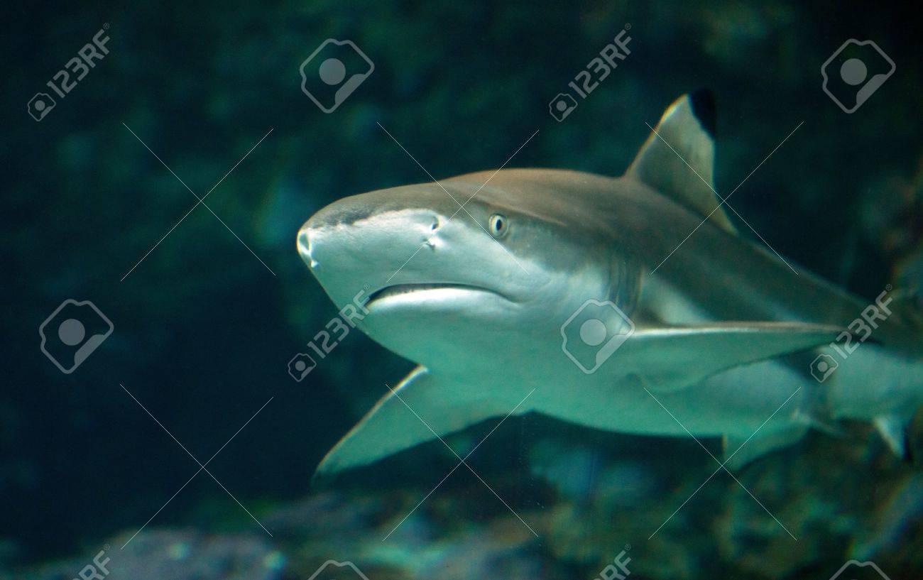 sand tiger shark Stock Photo - 13813034