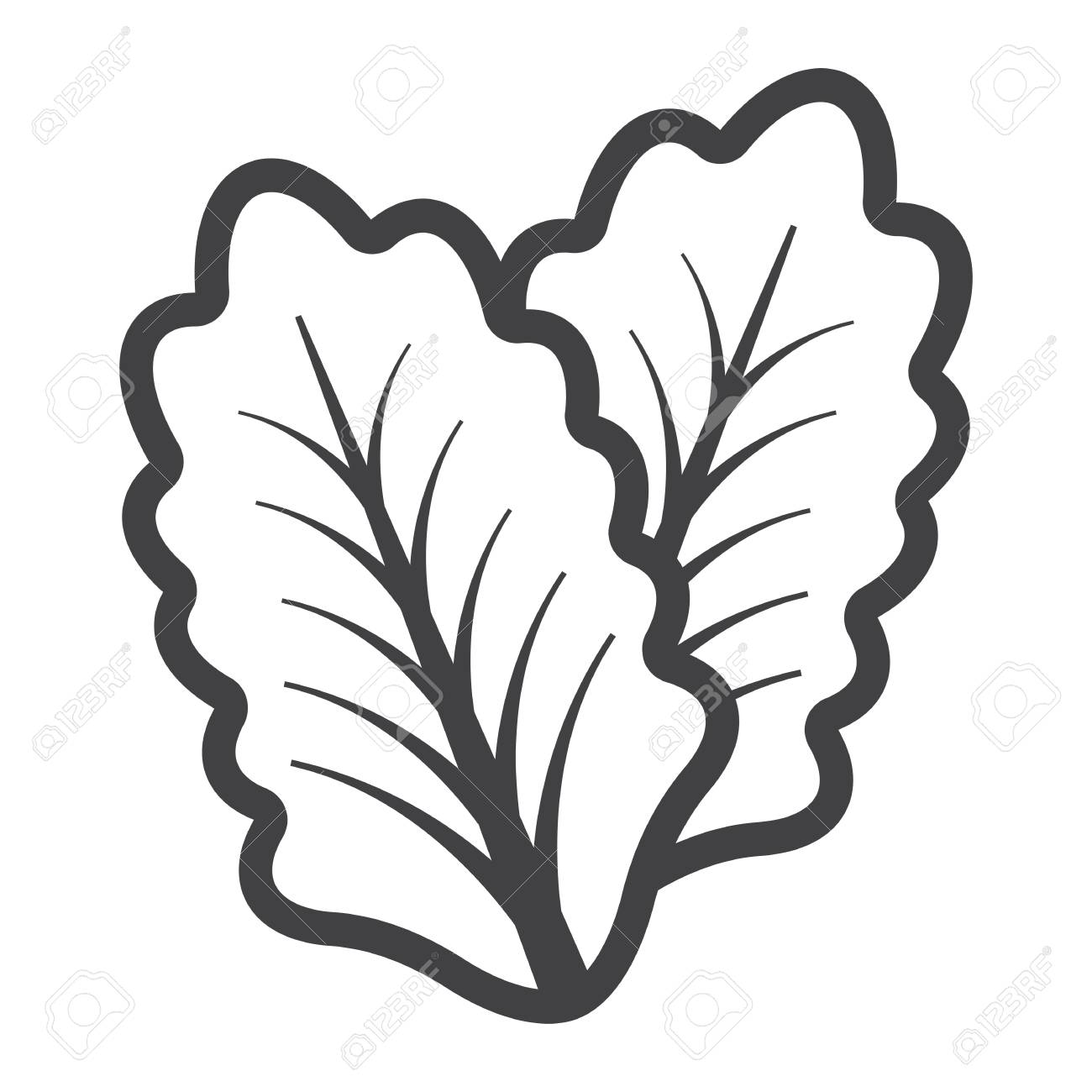 lettuce line icon vegetable and salad leaf vector graphics rh 123rf com royalty free graphics download royalty free graphics for games