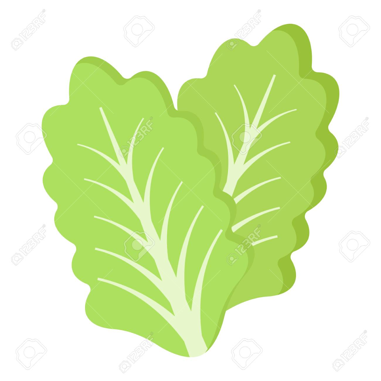 lettuce flat icon, vegetable and salad leaf, vector graphics,.. royalty  free cliparts, vectors, and stock illustration. image 80022279.  123rf