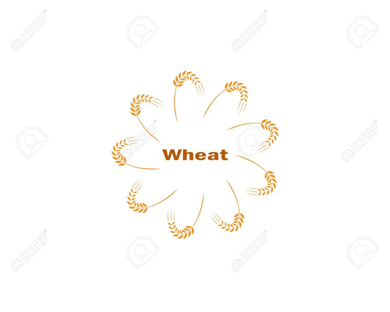 wheat Logo Template vector icon design - 151769928
