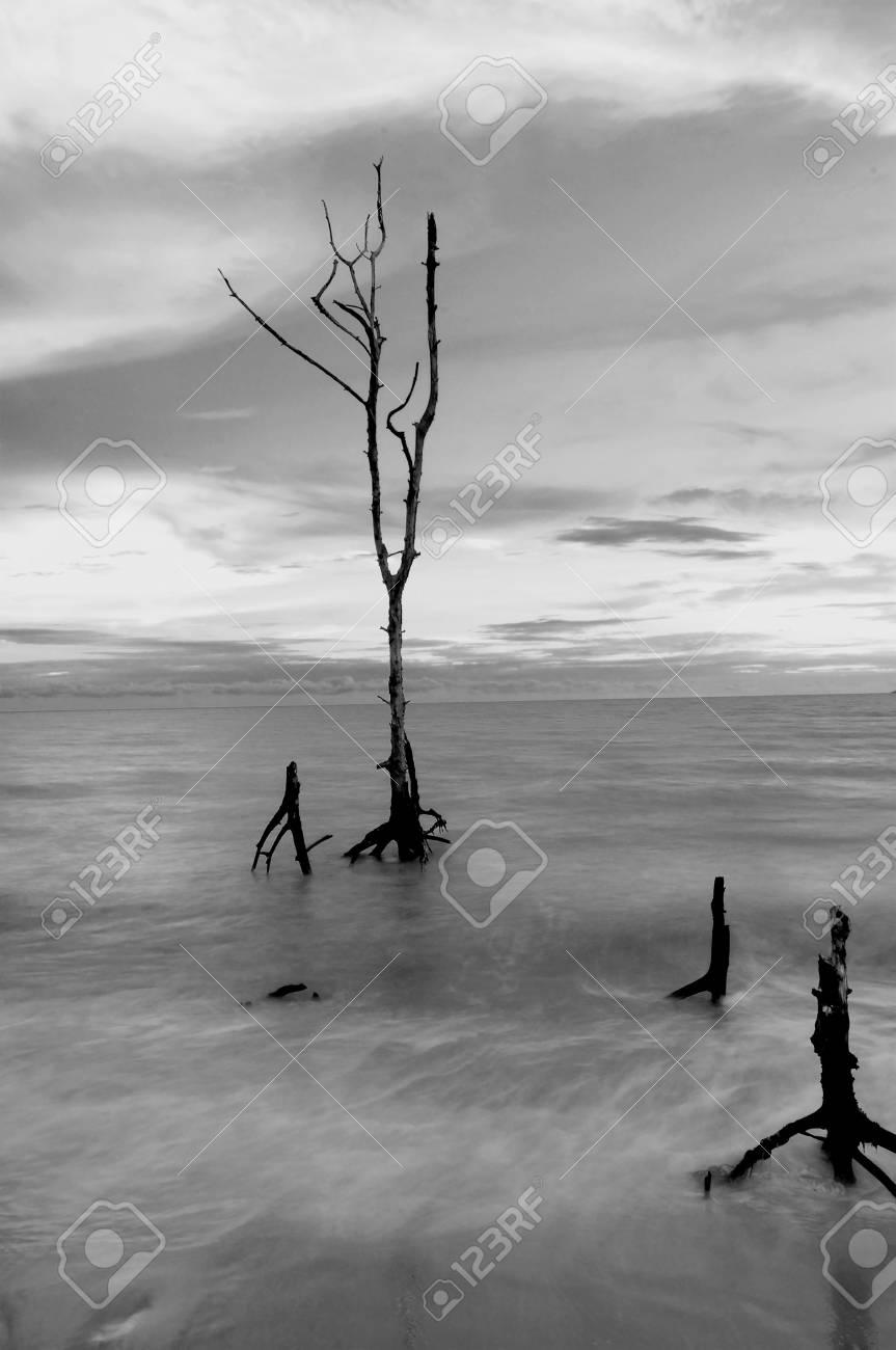 Blur beautiful long exposure seascape scenery of sunset black and white stock photo 74653432