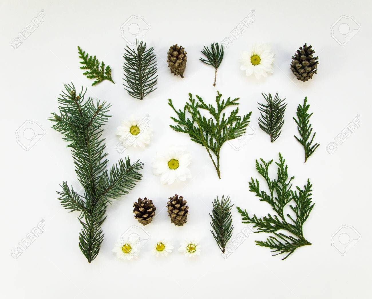 Creative natural layout of winter plants parts on white background creative natural layout of winter plants parts on white background thuja fir tree izmirmasajfo