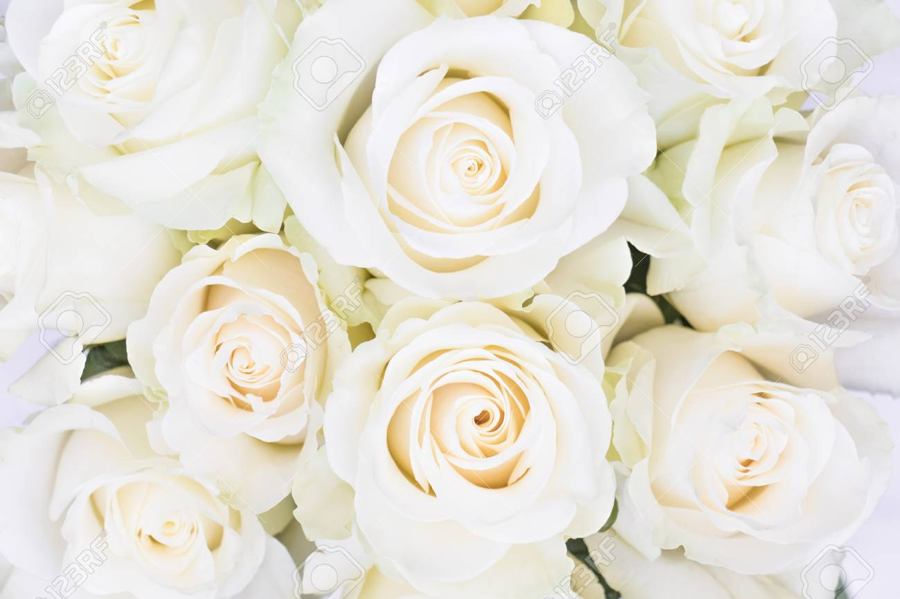 Parfait Bouquet De Roses à La Creme Pour Le Mariage L Anniversaire Ou La Saint Valentin Motif Floral Vue De Dessus Plancher