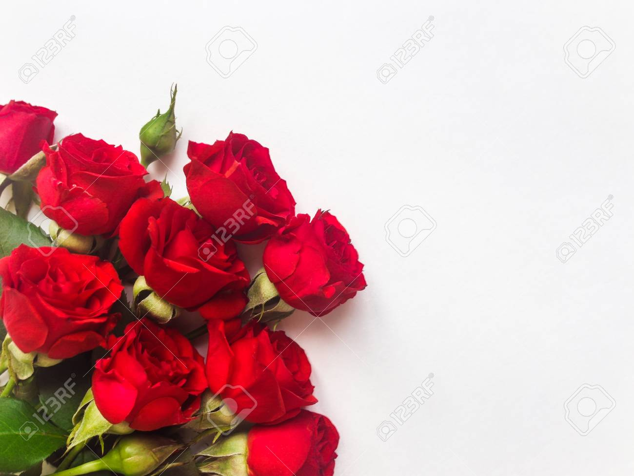 Bunch Of Small Beautiful Red Rose Flowers Isolated On White