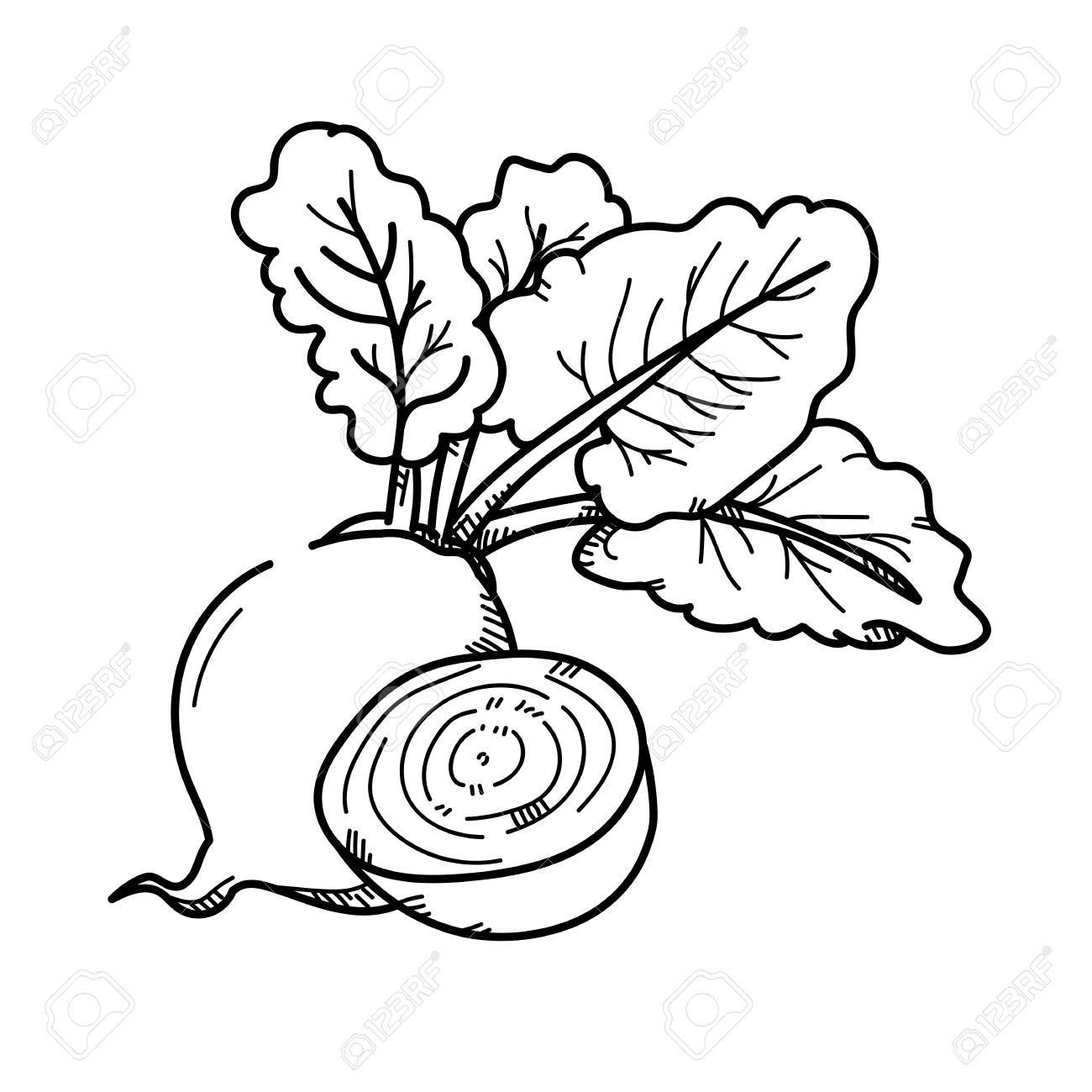 Freehand Drawing Illustration Beetroot Stock Photo Picture And