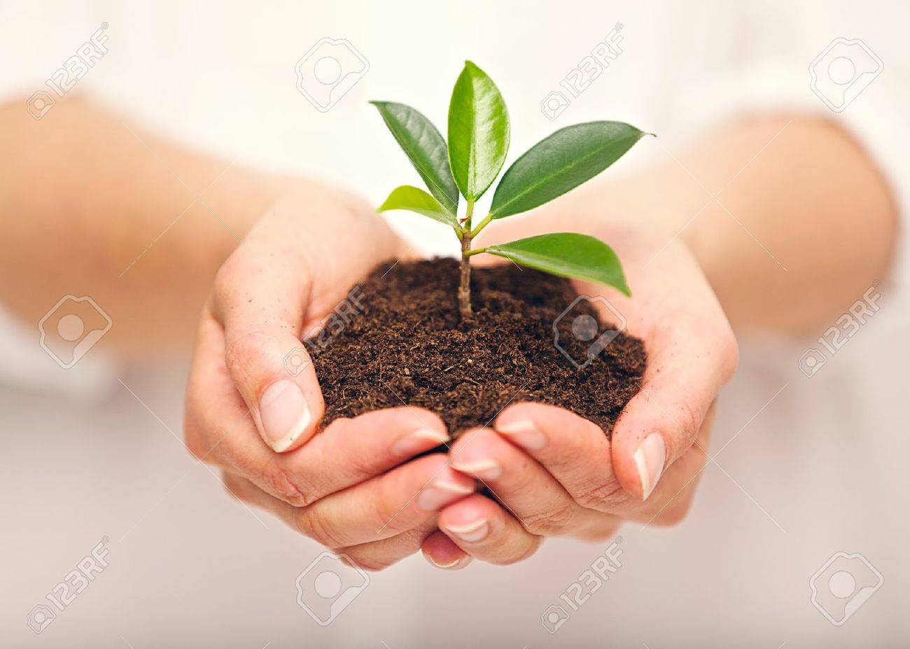 Woman's hands with a young plant growing in soil Stock Photo - 20899474