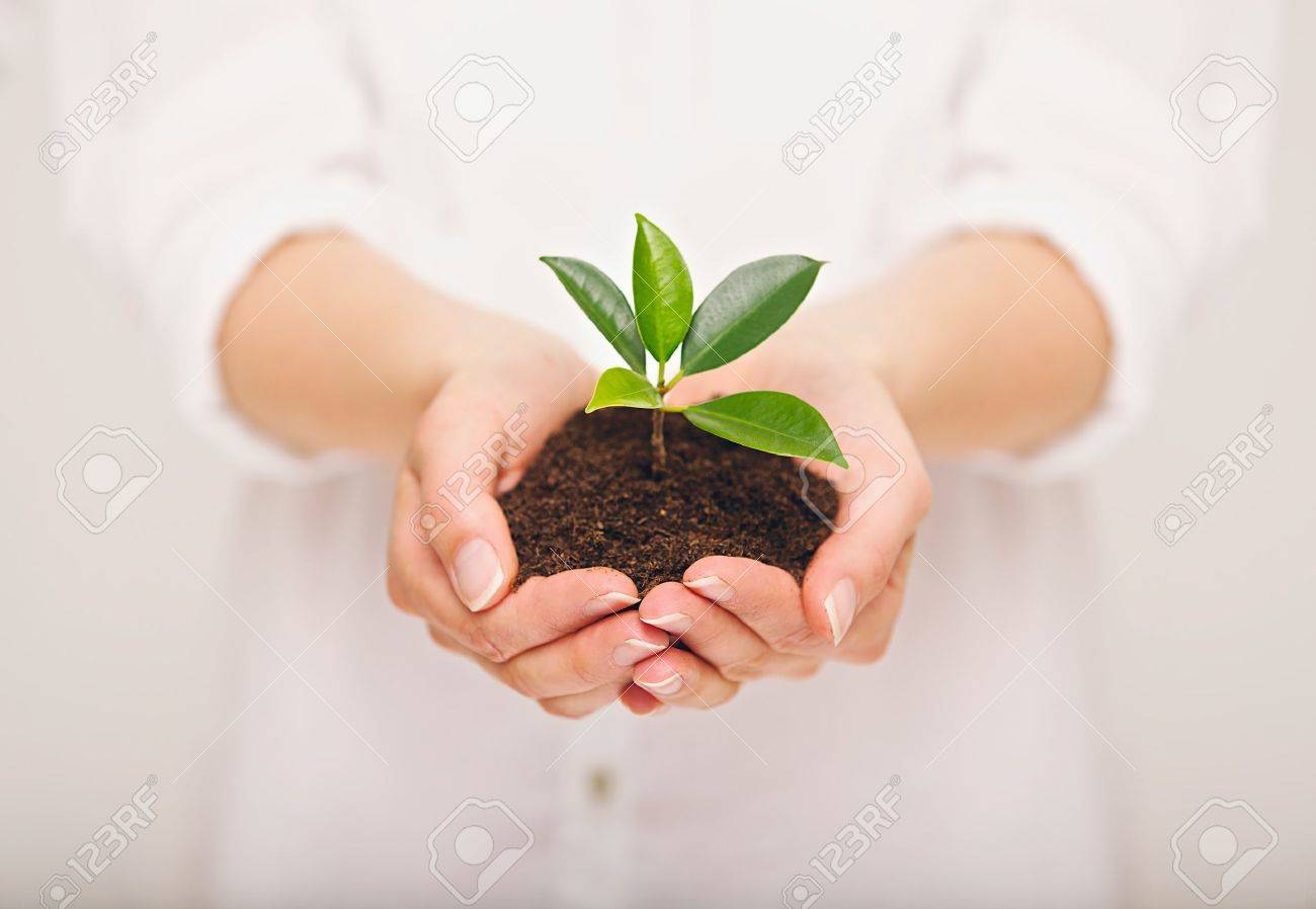 Woman's hand holding young plant, ecology concept Stock Photo - 21507309