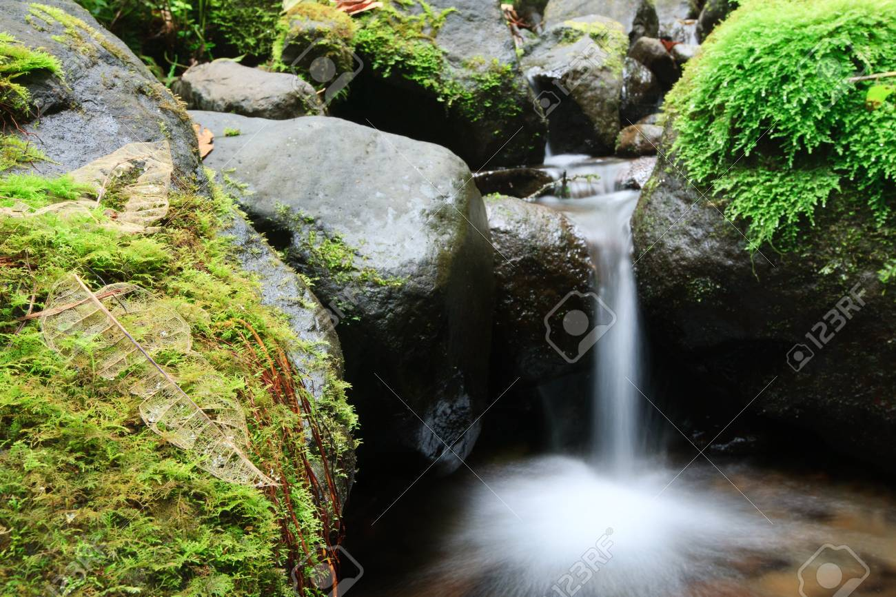 small fresh water river and rocks covered with specific vegetation Stock Photo - 9111266