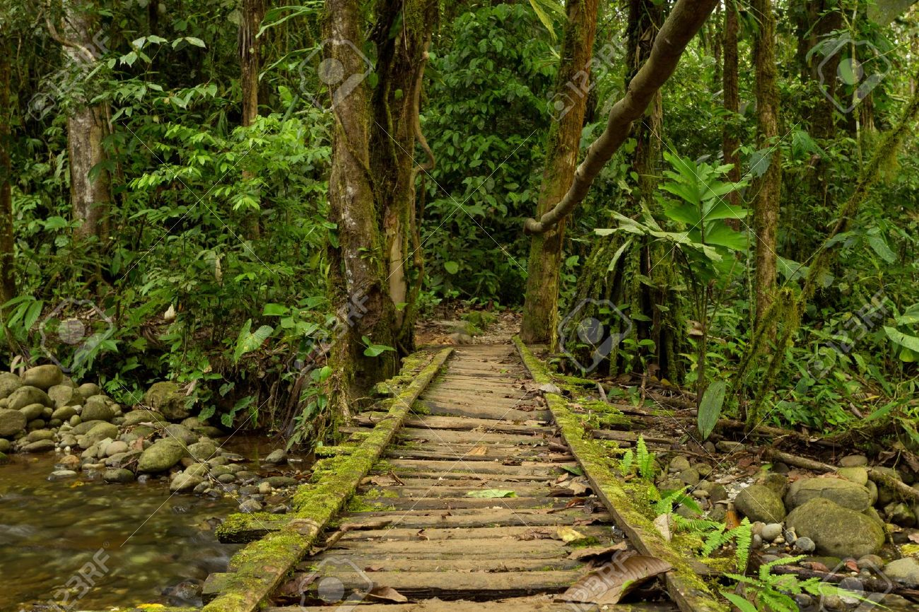Le Triskèle 11589079-Low-angle-view-of-a-wooden-bridge-in-the-Ecuadorian-jungle--Stock-Photo