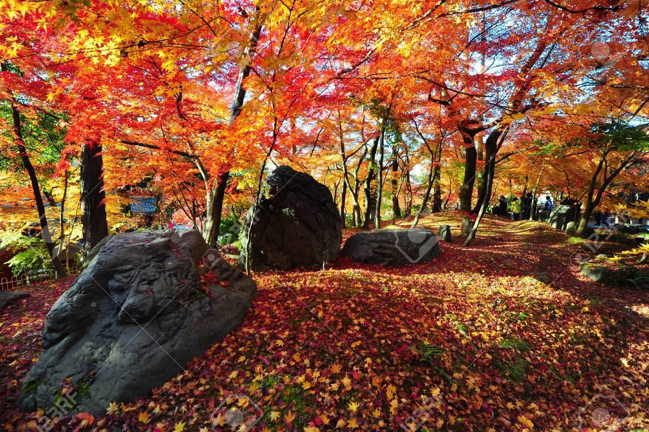 秋の間に、京都の永観寺でもみじ...