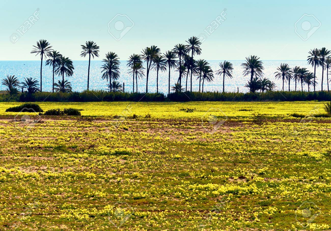 Lawn With A Bright Yellow Flowers And Palm Trees South Of Spain