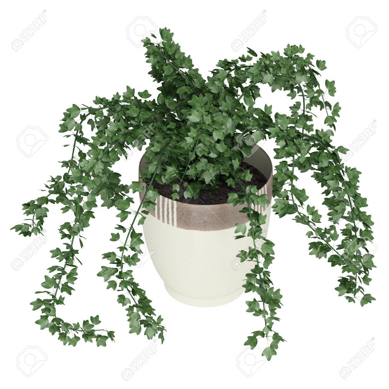 ivy houseplant, yucca elephantipes house plant, ivy water plant, ivy ice plant, ivy flower, ivy indoor plant, on ivy house plant pot